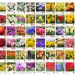pavasara_karte2
